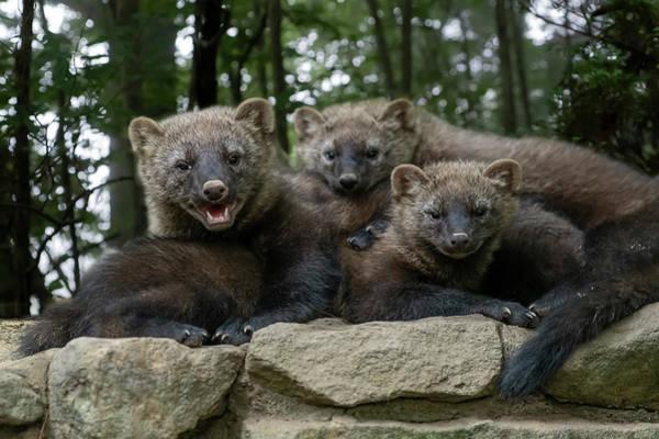 Photograph - Group Hug With Three Fishers by Dan Friend