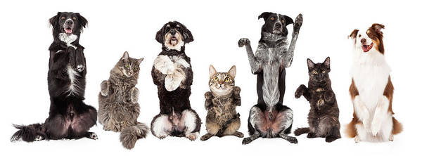 Wall Art - Photograph - Group Of Dogs And Cats Together Begging by Susan Schmitz