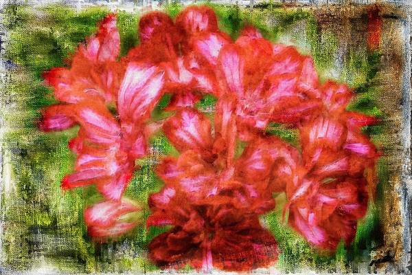 Digital Art - Group Of Red Flowers by Rusty R Smith