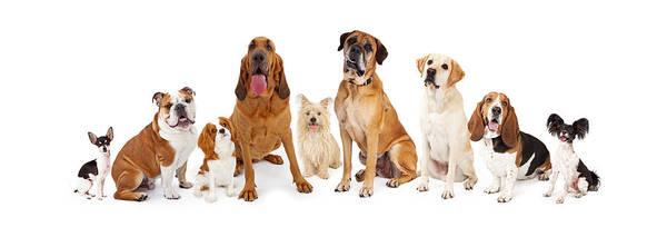 Big Dog Photograph - Group Of Various Size Dogs by Susan Schmitz