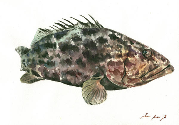 Saltwater Wall Art - Painting - Grouper Fish by Juan Bosco