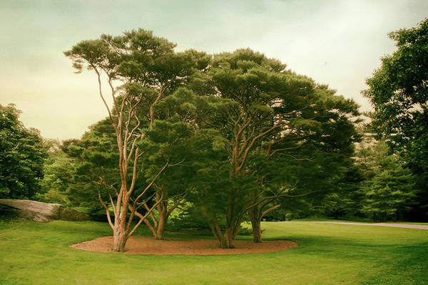 Photograph - The Tanyosho Pine Grove by Jessica Jenney