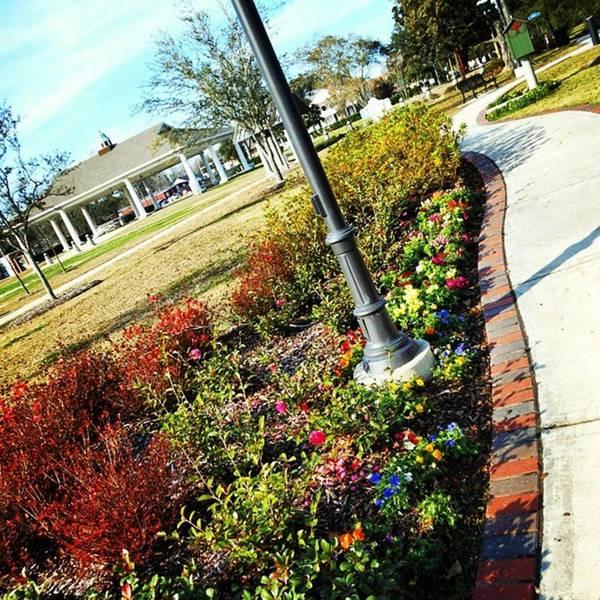 Photograph - Grove Park! by Cheray Dillon