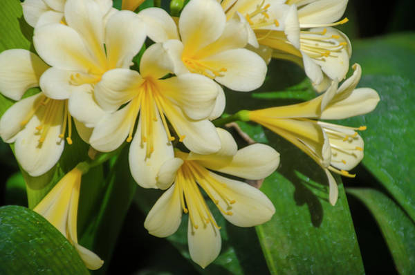 Photograph - Growing Beauty by Bill Cannon