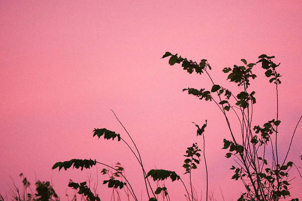 Wall Art - Photograph - Growing Into Pink Sky  by Ellie Teramoto