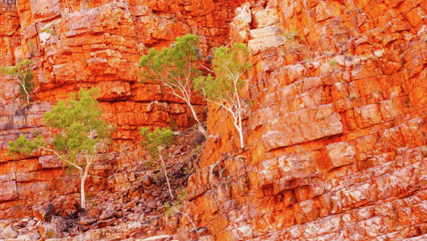 Photograph - Growing Through The Cracks - Ormiston Gorge, Northern Territory by Lexa Harpell