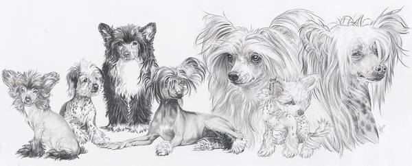 Wall Art - Drawing - The Chinese Crested And Powderpuff by Barbara Keith