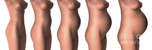 Wall Art - Digital Art - Growth Of Female Midsection by Stocktrek Images