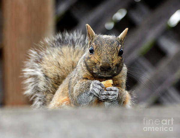 Photograph - Grumpy Squirrel by Susan Wiedmann