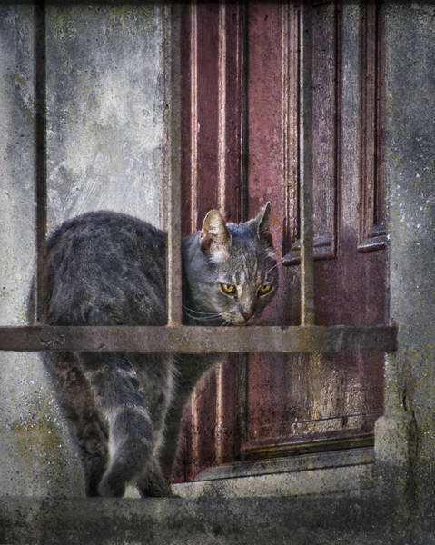 Photograph - Grunge Cat by Kevin Bergen
