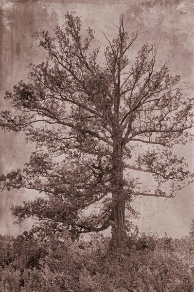 Mixed Media - Grunge Tree by Dan Sproul