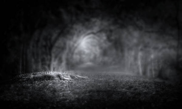 American Crocodile Photograph - Guardian Of The Forest II by Mark Andrew Thomas