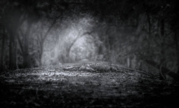 American Crocodile Photograph - Guardian Of The Forest by Mark Andrew Thomas