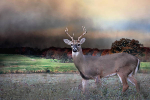 Photograph - Guardian Of The West Field by Jai Johnson