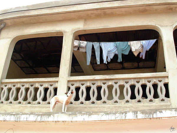 Photograph - Guarding The Laundry In Ghana by Wayne King