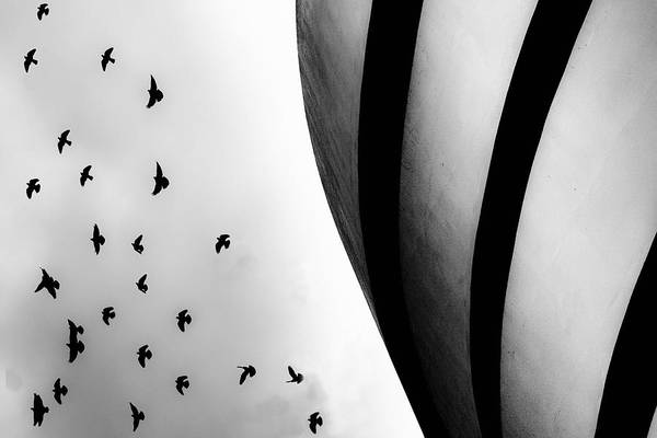 Photograph - Guggenheim Museum With Pigeons by Dave Beckerman