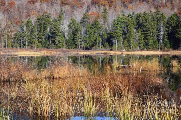 Photograph - Guinea Pond - Sandwich New Hampshire Usa by Erin Paul Donovan