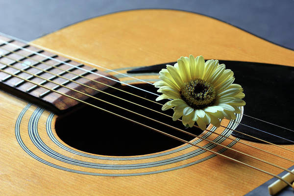 Photograph - Guitar And Daisy 2 by Angela Murdock
