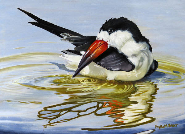 Wall Art - Painting - Gulf Coast Black Skimmer by Phyllis Beiser