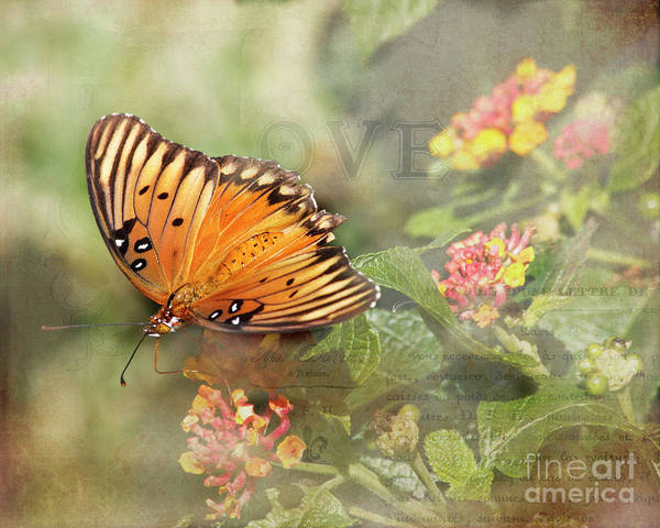 Passion Butterfly Photograph - Gulf Fritillary Butterfly by TN Fairey