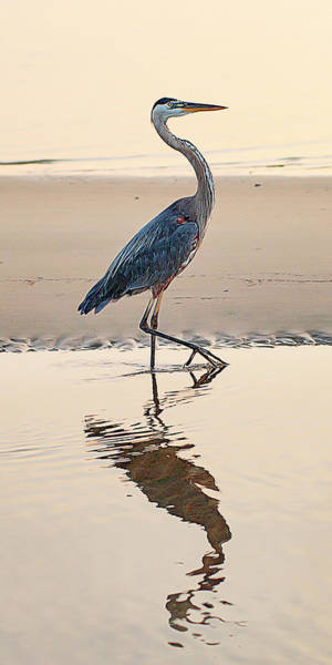 Photograph - Gulf Port Great Blue Heron by Scott Cordell