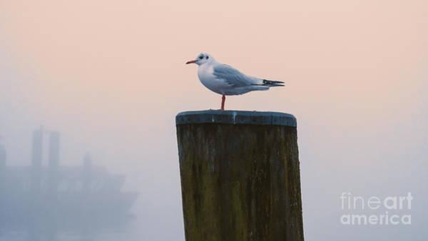 Gull And Fog Art Print