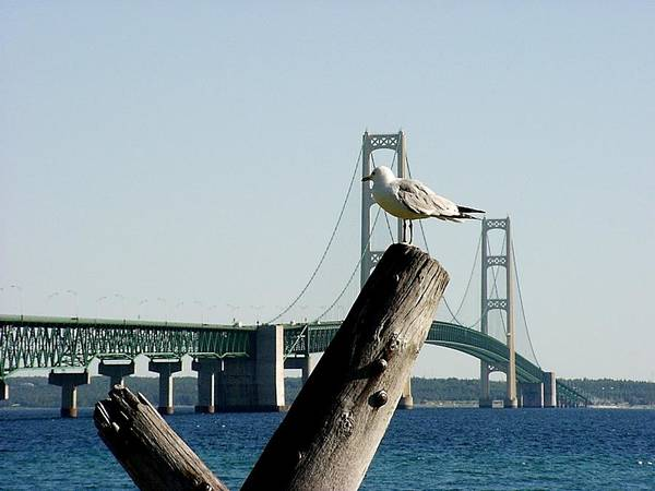 Photograph - Gull And Mackinac Bridge by Keith Stokes