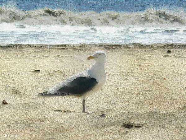 Photograph - Gull by Dee Flouton