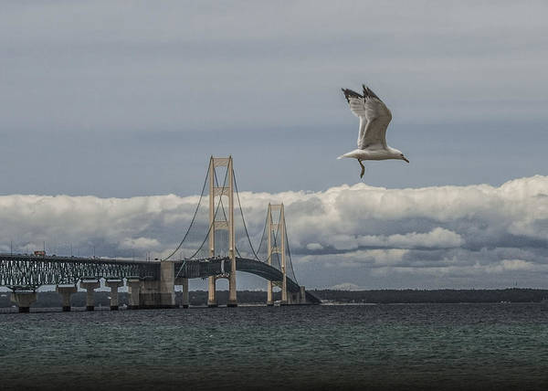 Photograph - Gull Flying By The Mackinac Bridge by Randall Nyhof