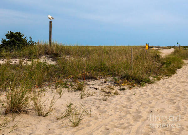 Wall Art - Photograph - Gull Greeter On The Cape by Michelle Constantine