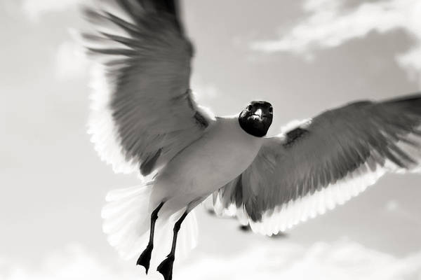 Photograph - Gull In Flight 2 by Marilyn Hunt