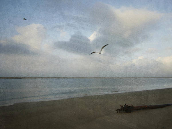 Photograph - Gull In Sky Abstract by Charles McKelroy