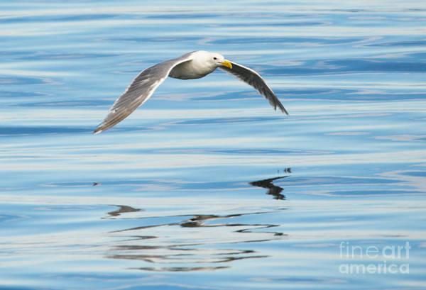 Gull Photograph - Gull Mirrored by Mike Dawson