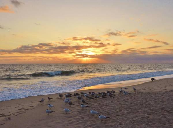 Wall Art - Photograph - Gull Of A Sunrise by Red Cross