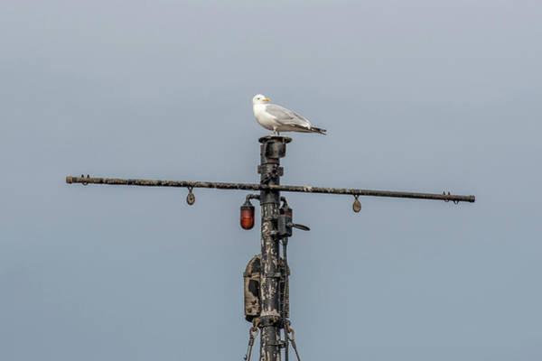 Wall Art - Photograph - Gull On A Mast by Paul Freidlund