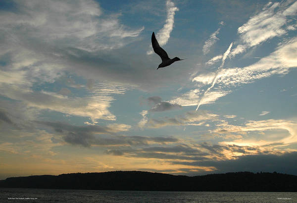 Photograph - Gull Over The Hudson by Frank Mari