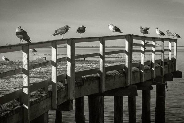 Photograph - Gull Row by Bud Simpson