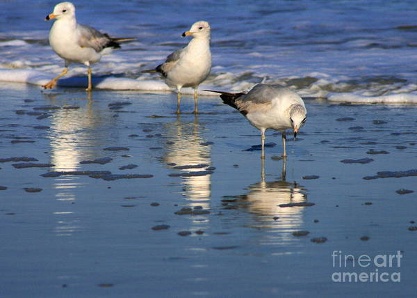 Photograph - Gull Trio by Angela Rath