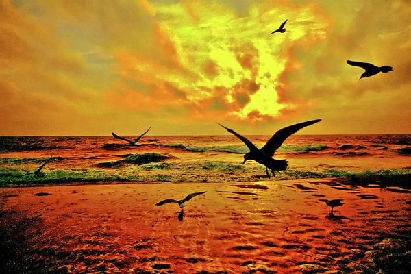 Photograph - Gulls At Dawn by Bill Jonscher