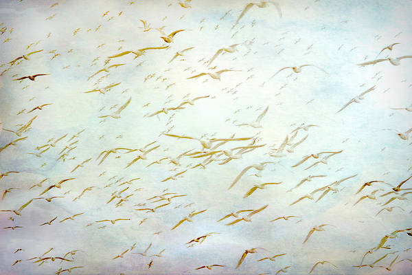 Painting - Gulls At The Beach by Peggy Collins