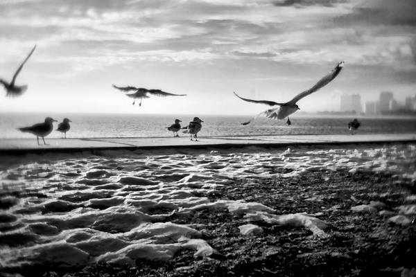 Photograph - Gulls By Chicago Lakefront by Sven Brogren