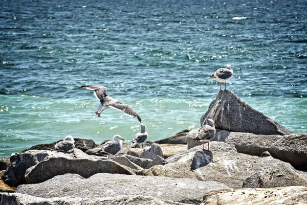 Tweets Photograph - Gulls by Camille Lopez