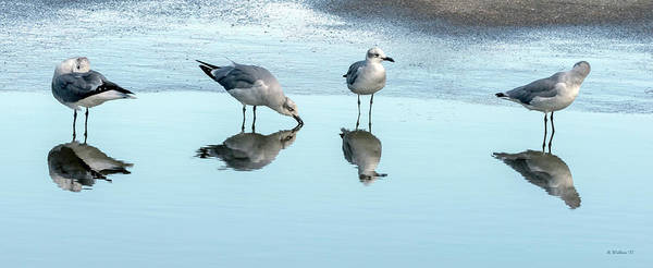 Wall Art - Photograph - Laughing Gulls Drinking Party by Brian Wallace