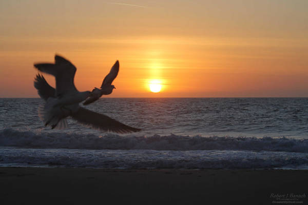 Photograph - Gulls Flying Off Into Sunrise by Robert Banach