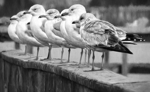 Photograph - Gulls In A Row Blackandwhite by Alice Gipson