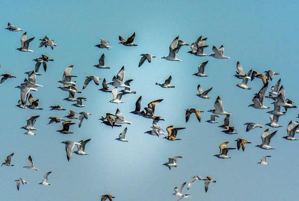 Photograph - Gulls In Flight by Randy J Heath