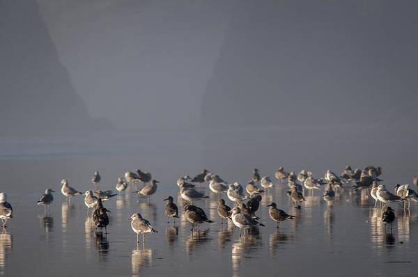 Photograph - Gulls On A Foggy Beach by Robert Potts