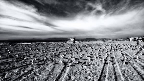 Photograph - Gulls On Beach by Michael Hope