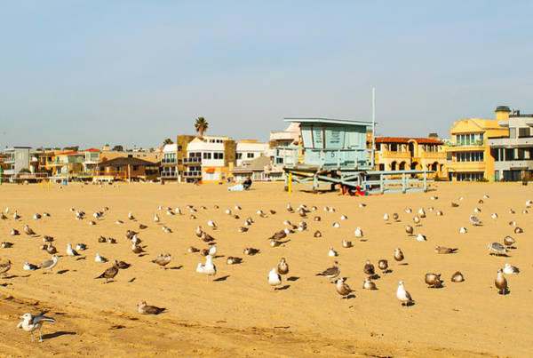 Photograph - Gulls On Sand by Michael Hope