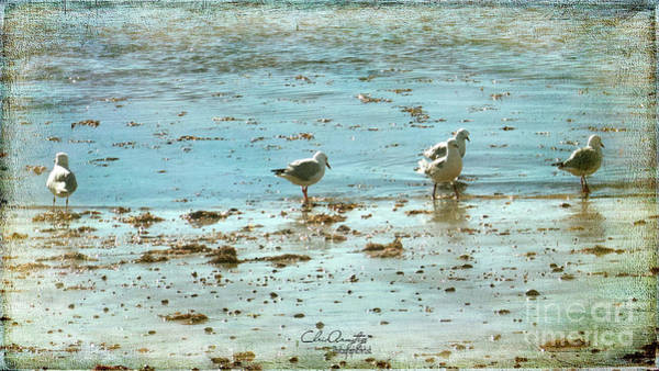 Photograph - Gulls On The Edge by Chris Armytage
